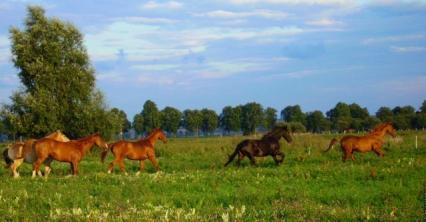 Fotografie: Justyna Klimczak
