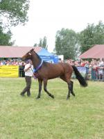 Żuławskie Targi Rolne W Starym Polu 14-15 czerwca 2008r.